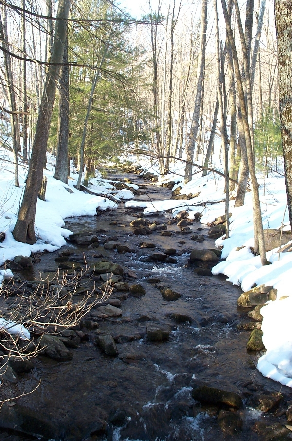 Cherry Run in Winter