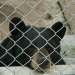 Bear Exhibit
